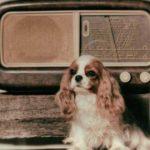 dog news radio