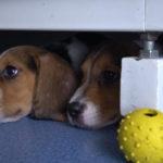 dog news dog research study