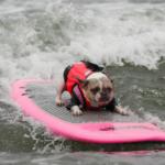 dog news dog sport