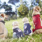 dog news dog training
