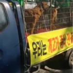 dog news Korean dog meat