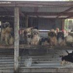 dog news puppy rescue