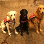 dog news dog training
