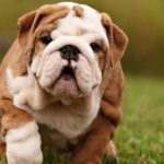 dog news online ads