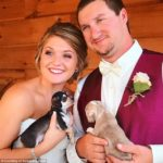 dog news dog lover wedding