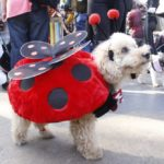 dog news dog costume
