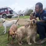 dog news puerto rico