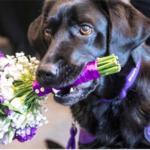 dog news gift