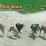 dog news dog race