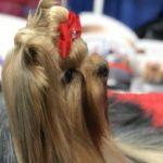 dog news dog show 2017