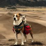 dog news travel