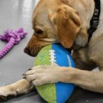 dog news CIA dog training