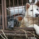 dog news dog rescue south korea