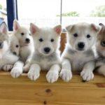 dog news UK