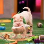 dog news puppy bowl