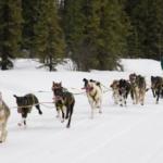 dog news Alaska