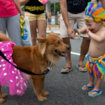 dog news Brazil