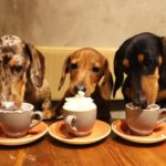 dog news Dachshund Cafe UK