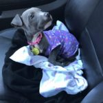 dog news dog rescue