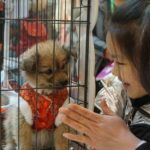 dog news China