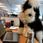 dog news dog life