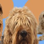 dog news dog breeds