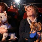 dog -news- dog-film
