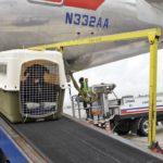 dog-news-airline