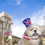 dog-news-British