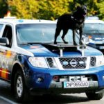 dog-news-police-dog-Spain