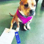 dog-news-RescueDog