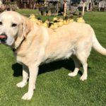 dog-news-DogStory