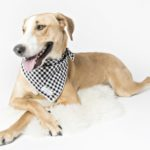 dog-news- DogRescue