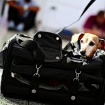 dog-news-DogTravel
