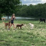dog-news-puppy-mill
