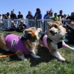 Dog-news-dogs-race