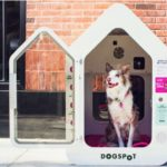 dog-news-Summer-DogCare