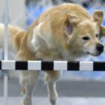 dog-news- KennelClub