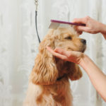 dog-news-DogGrooming