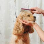 dog-news-DogGrooming