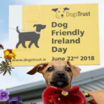 dog-news-DogFriendlyDay