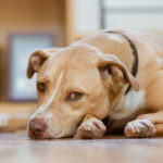dog-news-DogName