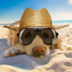 Dog-news-Summer