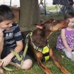 dog-news-ServiceDog