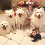 dog-news- family