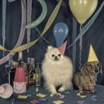 dog-news-DogBirthday