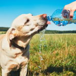 dog-news-DogCare-Summer