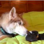 dog-news-Pets