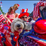 dog-news-July4th
