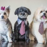 dog-news-PuppyPageant